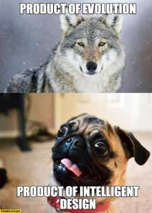 wolf-product-of-evolution-pug-product-of-intelligent-design